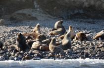 Punta Arenas (200)