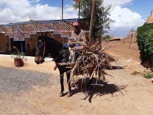 Les chevaux sont très pratiques pour se déplacer et pour les tâches plus ardues.