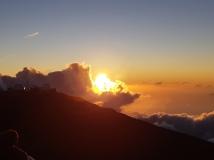 Maui (502)