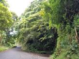 Paysage verdoyant sur la mythique Hana Road