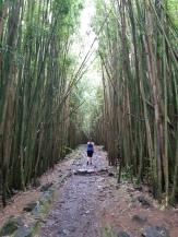 Dans la forêt de bambou des 7 pool au Haleakala National Park