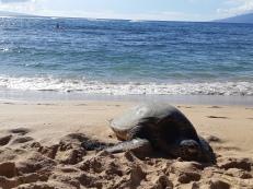 Plongée en apnée avec les tortues de mer... Check!