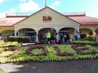 Visite de la plantation d'ananas Dôle